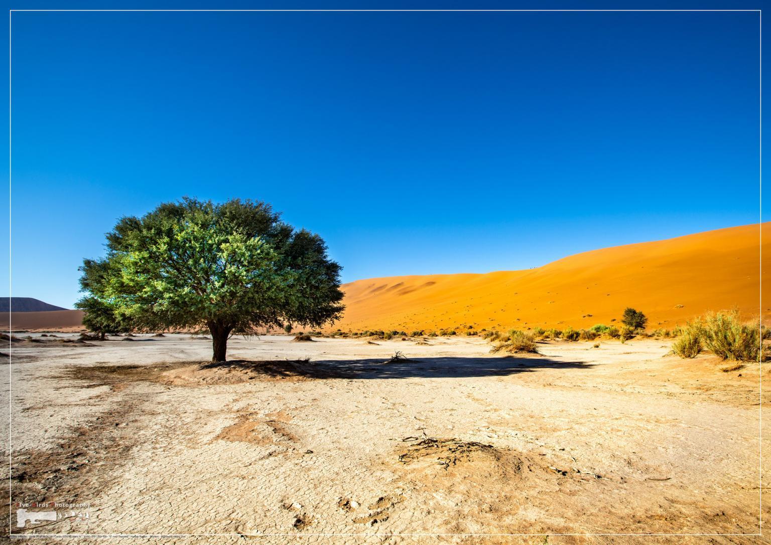 Vegetation in the Namib Desert in Sossusvlei