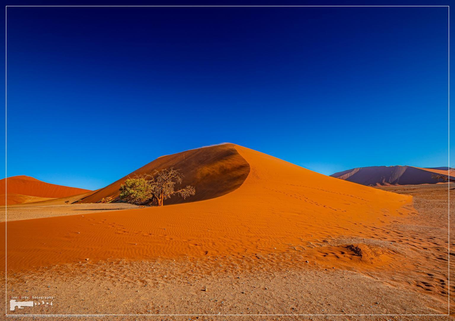 The world famous dune 45 in the Sossusvlei of the Namib Desert in Namibia